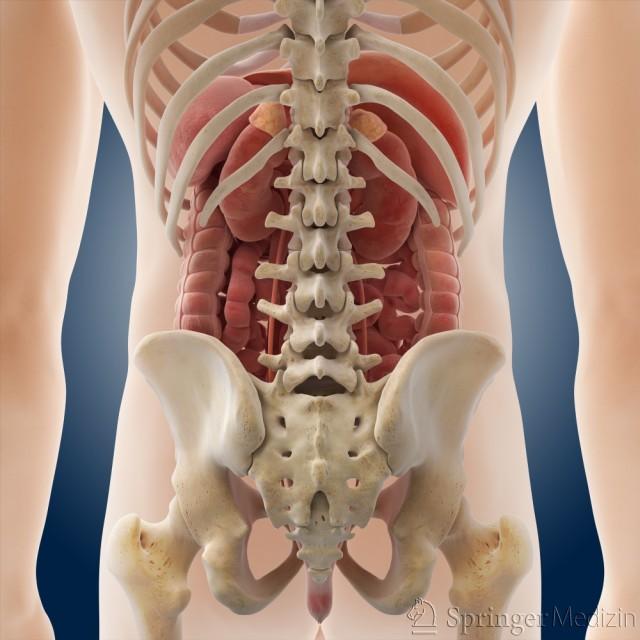 Rechts oder sitzt die links wo bauchspeicheldrüse Akute Bauchspeicheldrüsenentzündung