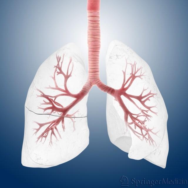 Lunge latein