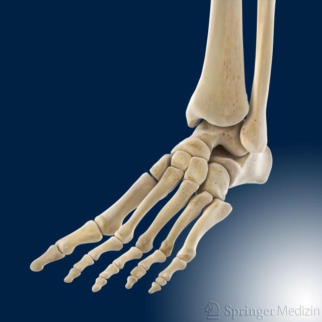 Auf dieser Abbildung sehen Sie den Fuß von schräg oben. Sie sehen die verschiedenen Fußknochen.