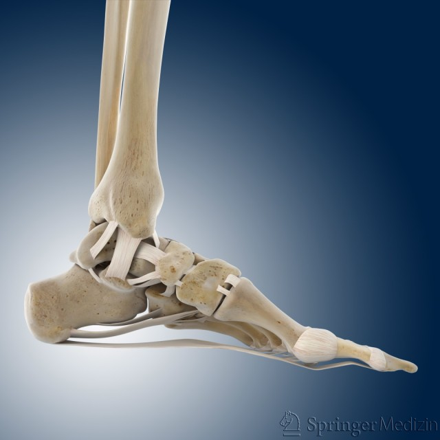 Auf dieser Abbildung sehen Sie den Fuß von der Seite. Sie schauen auf die Innenseite vom Fuß.